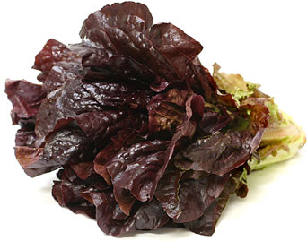 Red Outrageous Lettuce