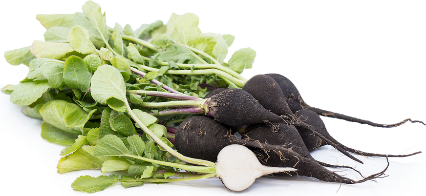 Black Radishes picture