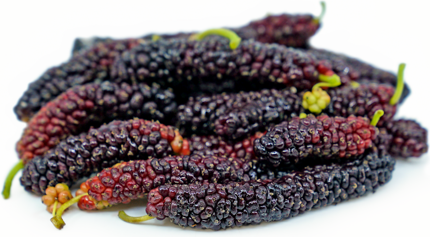 Pakistan Mulberries picture