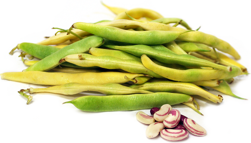 Tiger's Eye Shelling Beans