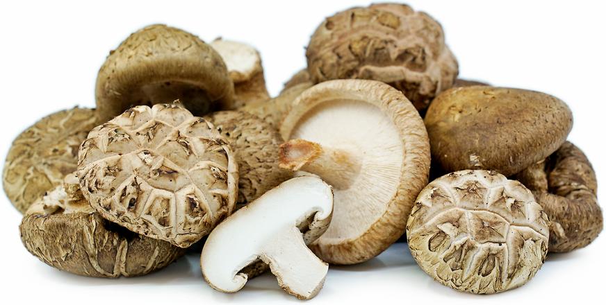Image result for shiitake mushroom