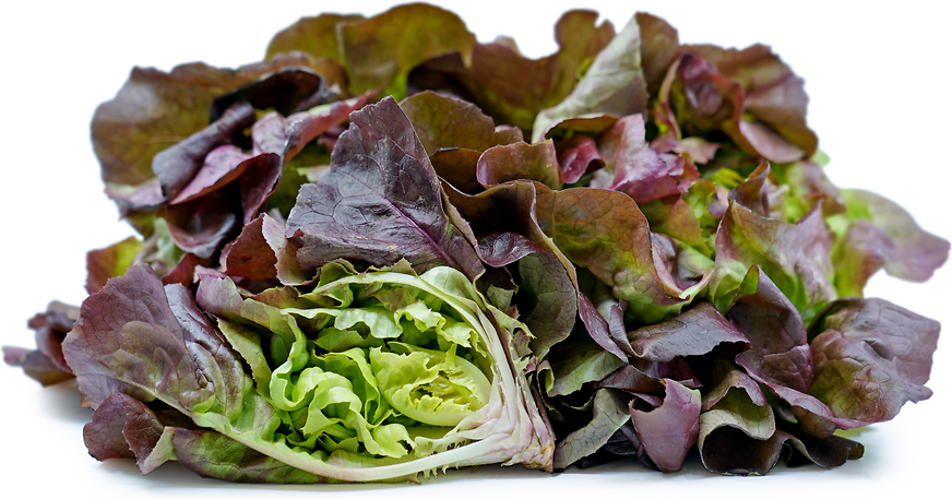 Red Boston Hydroponic Lettuce picture