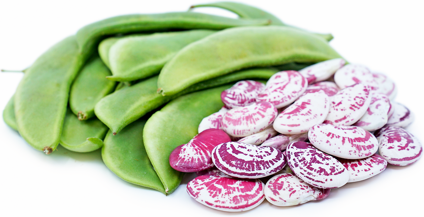 Christmas Lima Shelling Beans picture