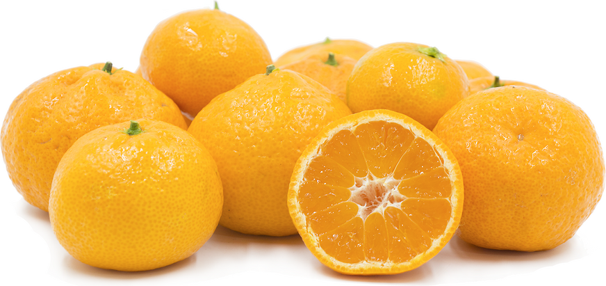 Seedless Satsuma Tangerines picture