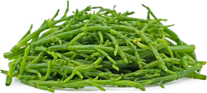 Sea Beans Information, Recipes and Facts