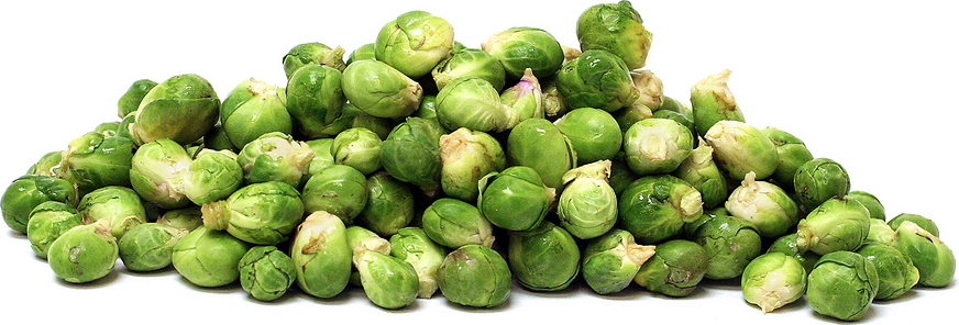 Micro Brussels Sprouts picture