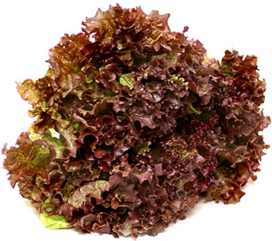 Red Leaf Lettuce picture