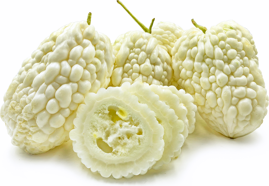 White Bitter Melon
