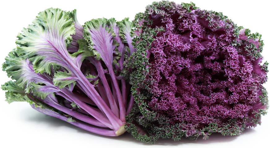 Kale Purple Information Recipes And Facts