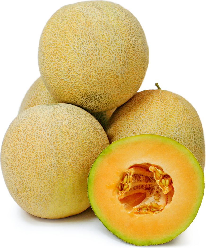 Persian Melon picture