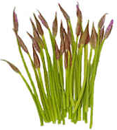 Garlic Chive Spears picture