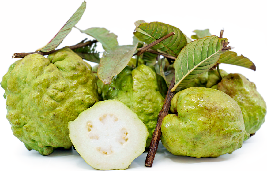 Thai Guavas Information, Recipes and Facts