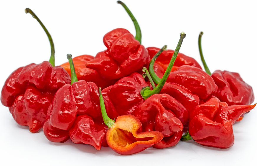 Red Scorpion Chile Peppers