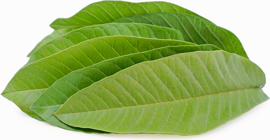 Guava Leaves Information, Recipes and Facts