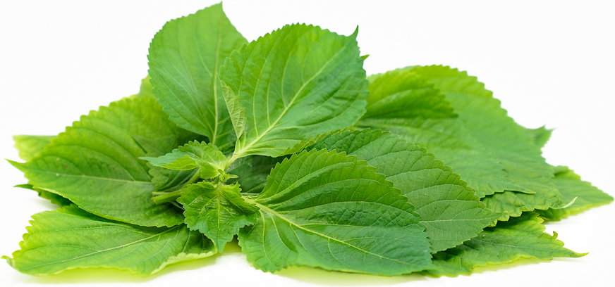 Perilla Leaves Information Recipes And Facts