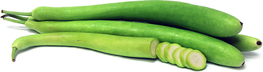 Cucuzza Squash picture