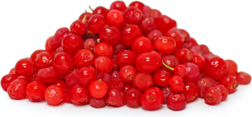 Red Huckle Berries picture