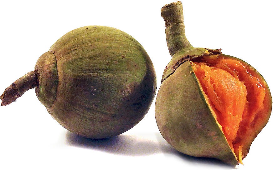 Zapote Information, Recipes and Facts