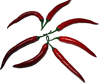 Red Finger Hot Chile Pepper