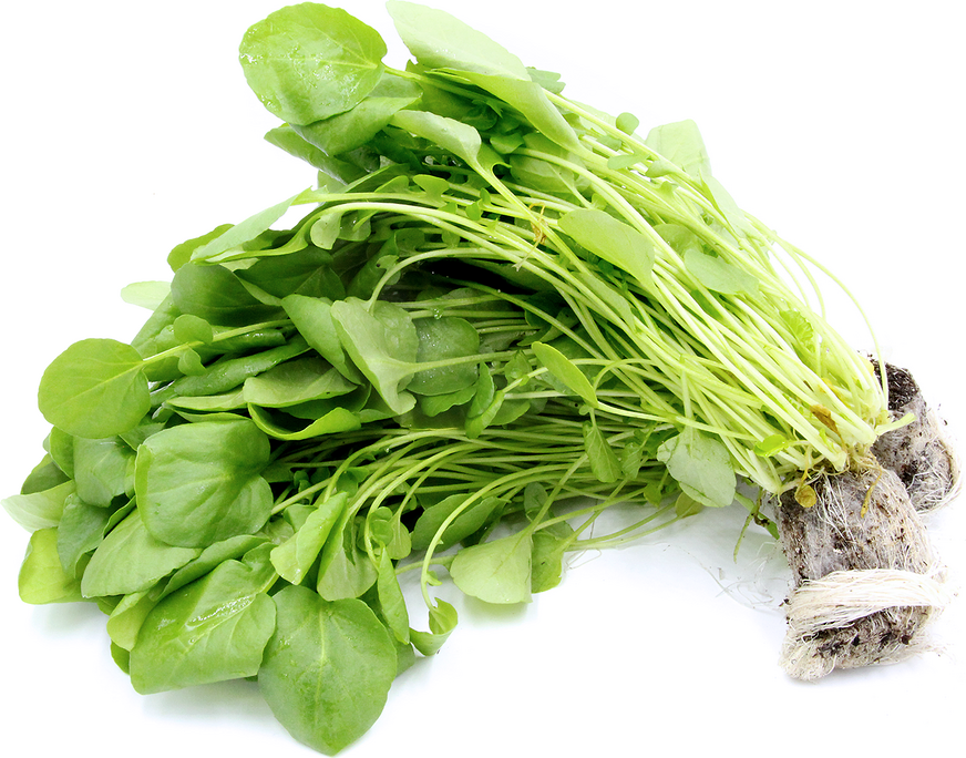 Organic Hydro Watercress Go Green Information And Facts