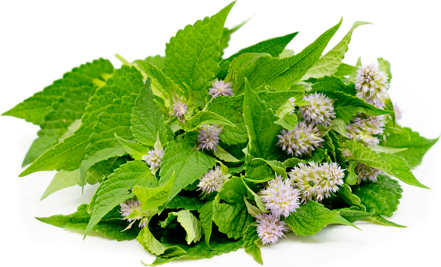Anise Hyssop Information, Recipes and Facts