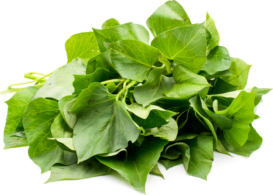 yam leaves information recipes and facts