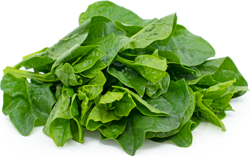 Malabar Spinach Information, Recipes and Facts