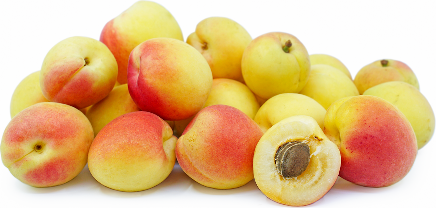 Cot-n-Candy Apricots