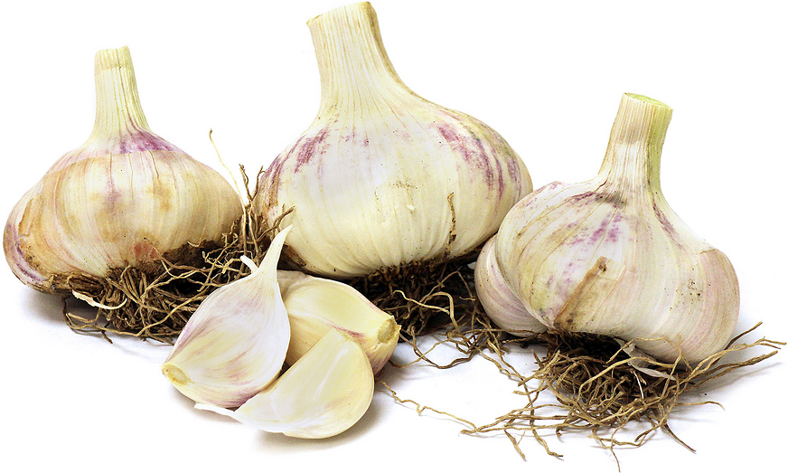 Red Toch Garlic picture