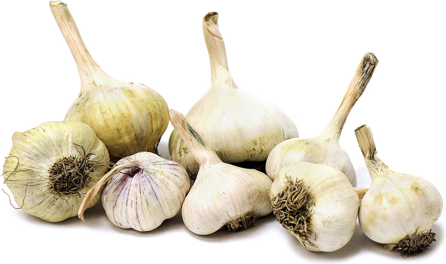 Mixed Heirloom Garlic picture