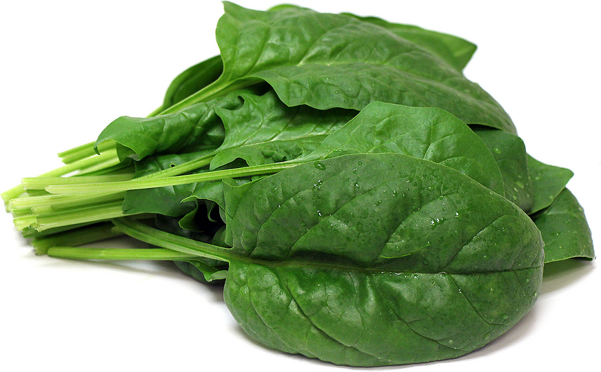 Hydro Bloomsdale Spinach picture