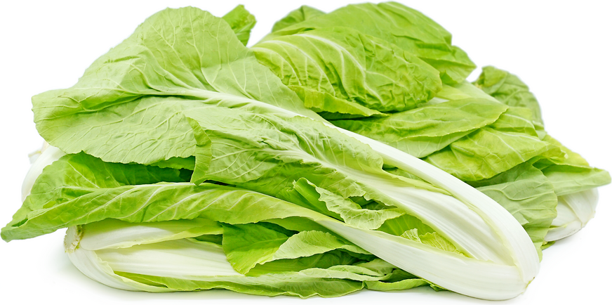 Taiwan Bok Choy picture