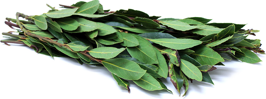 Foraged California Bay Leaves