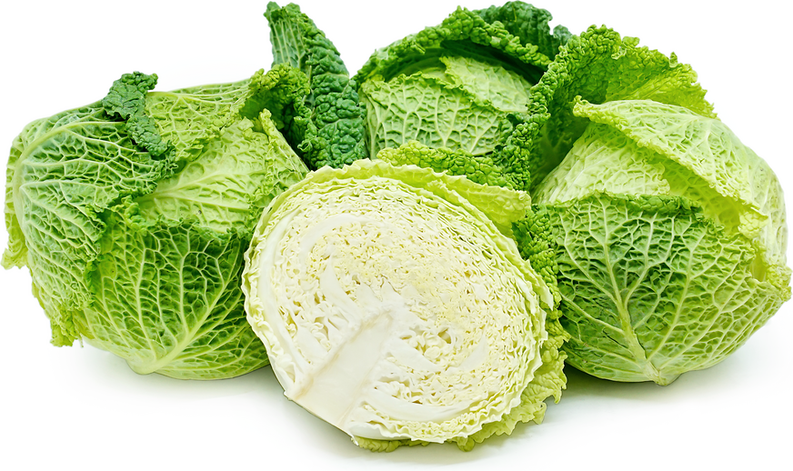 Savoy Cabbage picture