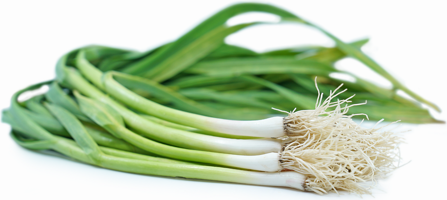 Green Garlic picture