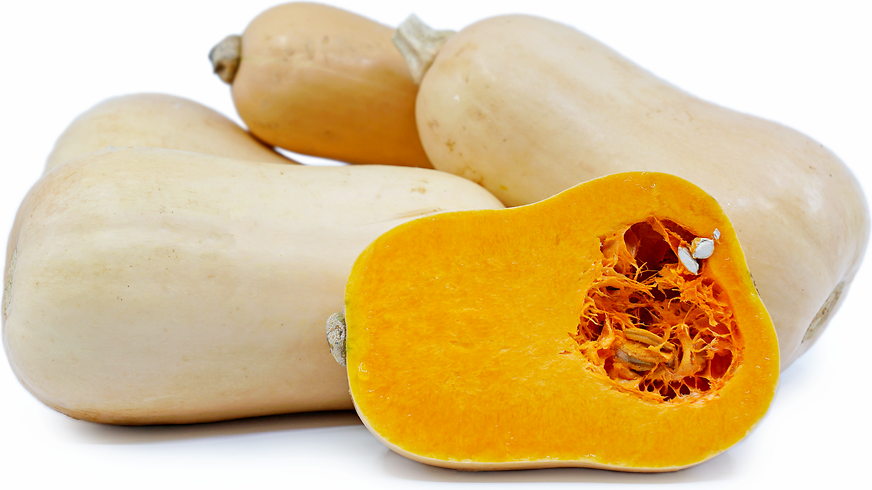 Butternut Squash picture