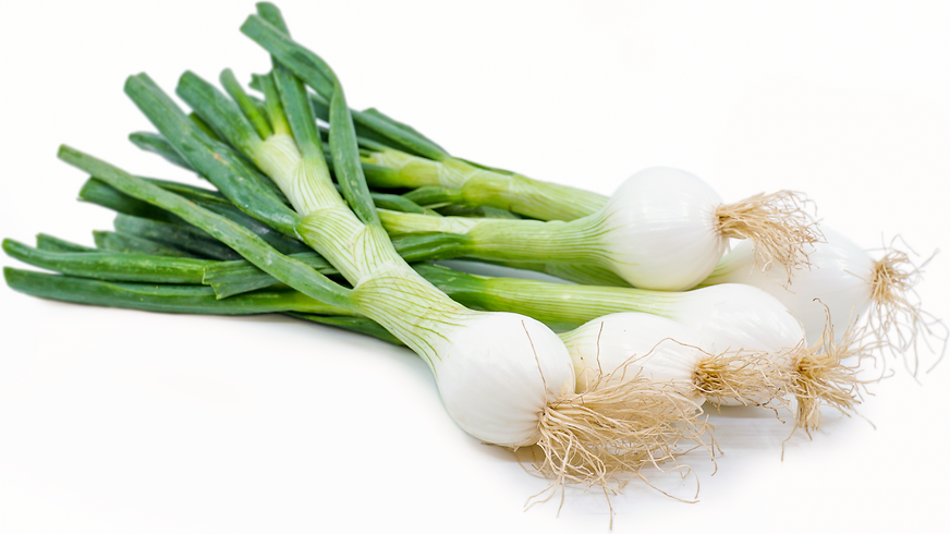 Young Spring Onions picture