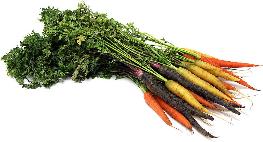 Organic Rainbow Carrots Carrots Bunch Rainbow