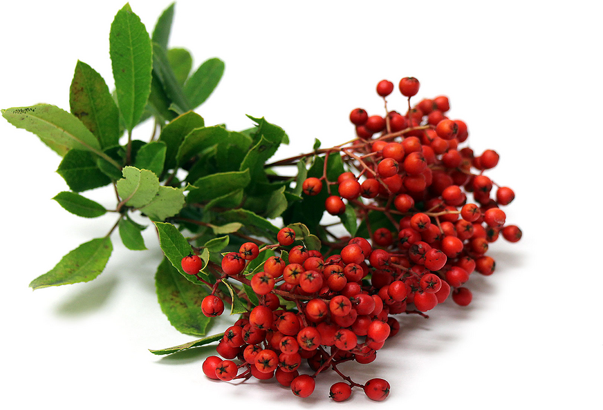 Christmas Berries Information, Recipes and Facts