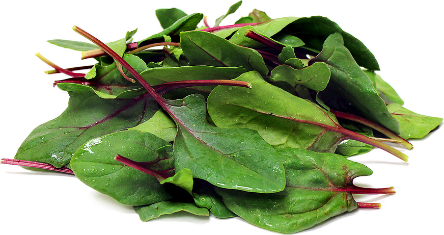 Bordeaux Spinach picture