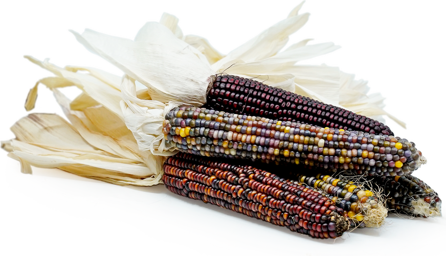 Ornamental Indian Corn picture