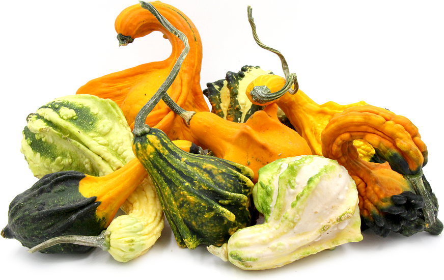 Ornamental Gourds picture